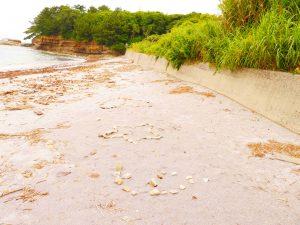 佐久島のインスタ映えスポット、紫の砂浜(新谷海岸)